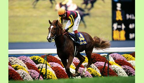 水曜馬スペ!京都競馬場 グランドスワンと歩んだ40年